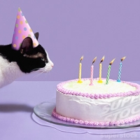 """A Cat Had A Birthday..."""